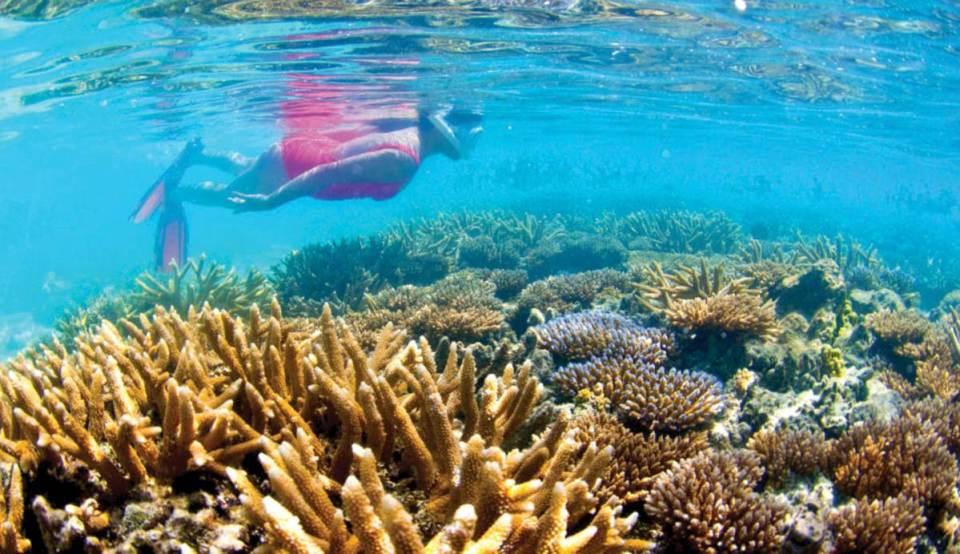 Micronésia Recifes de Coral