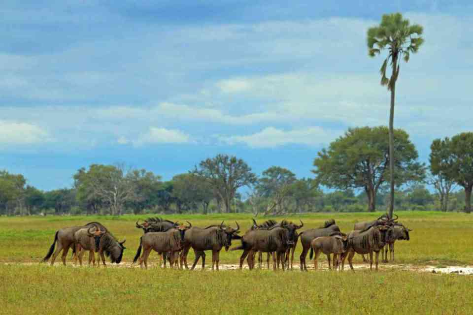 Parque Nacional de Hwange