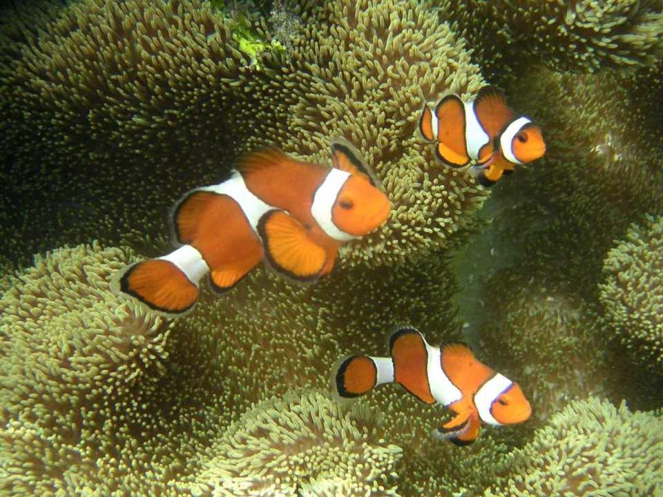 Parque marinho do recife de Tubbataha