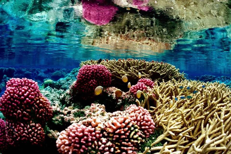 Recifes de Coral em Antígua e Barbuda