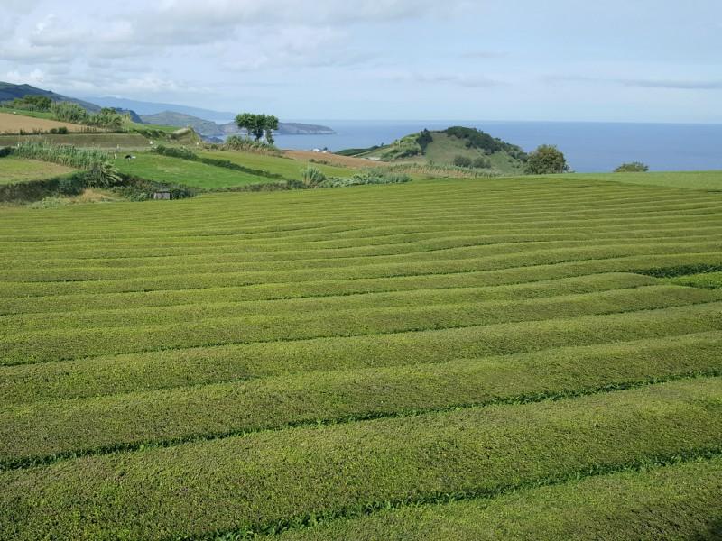 São Miguel- Açores