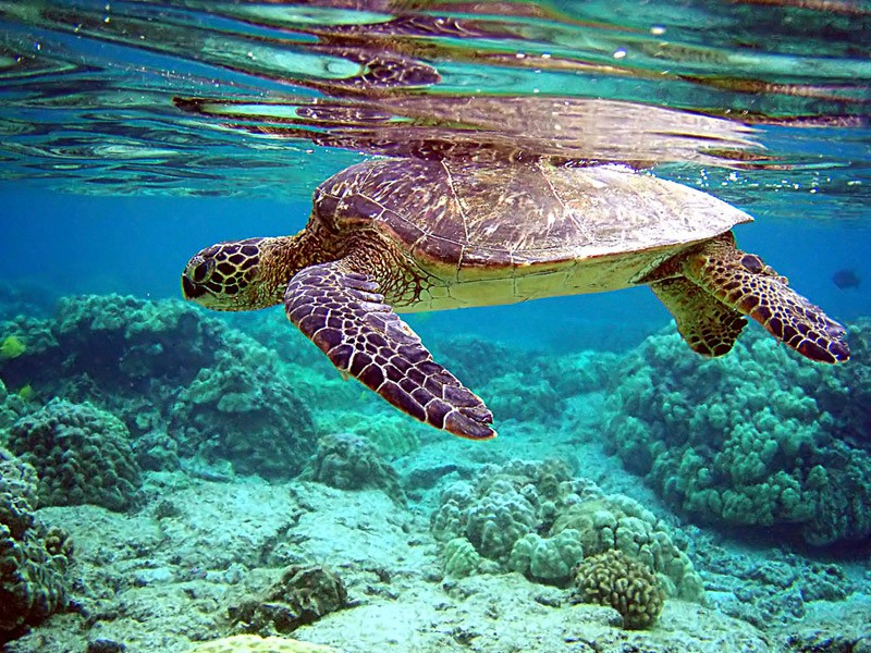 Isla Cozumel - Riviera Maya