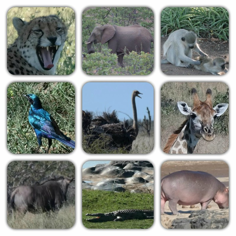 Africa Austral - Animais