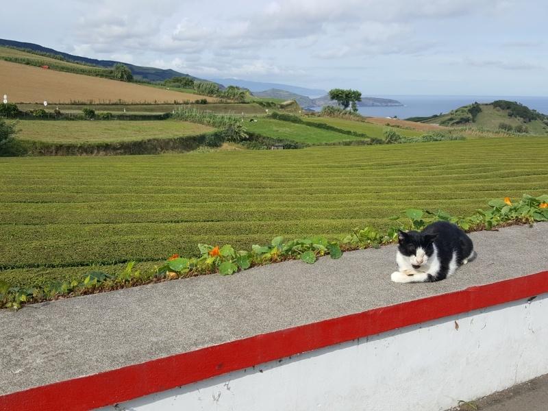 São Miguel- Açores- Portugal