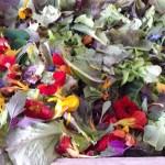 salade mesclun et fleurs 10 07 16