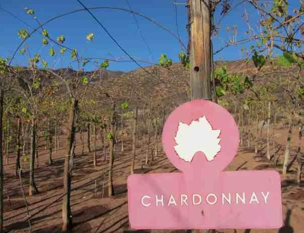 Tagesausflug Weinprobe Mexiko