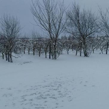 Neige : distribution de fruits du 7 février reportée au 14