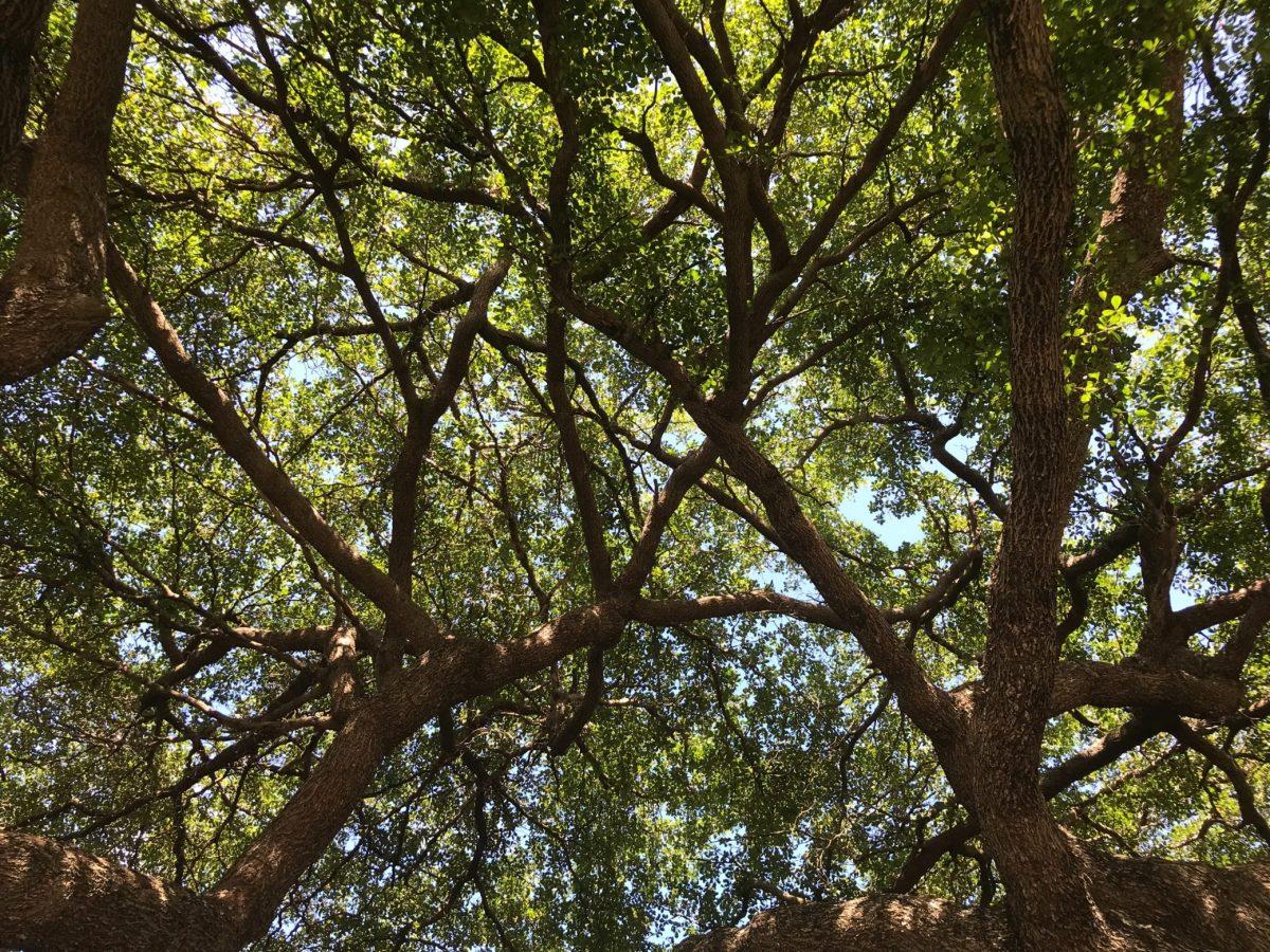 Native Plants in Florida