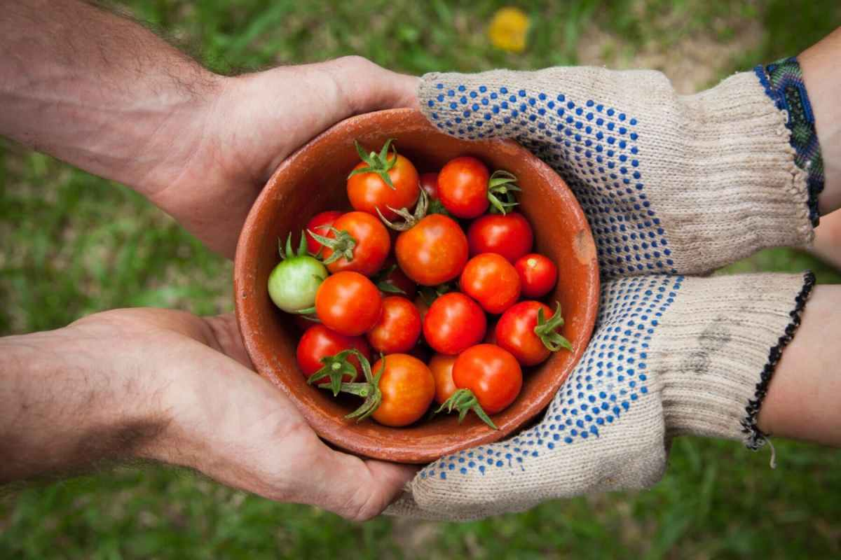 5 Basic Organic Horticulture Tips