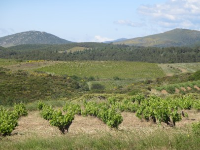 Clos Fantine vineyards
