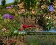Fleurs dans les parcelles de Mas Coutelou
