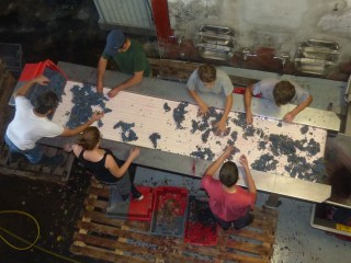 Sorting the last case, (clockwise from left) Vincent, James, Morgane, Julien, Charles, Priscilla