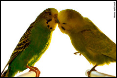 Bacio 「キス・Kiss」