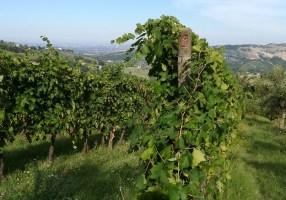 カンティーナ訪問記: Vini di Giulia