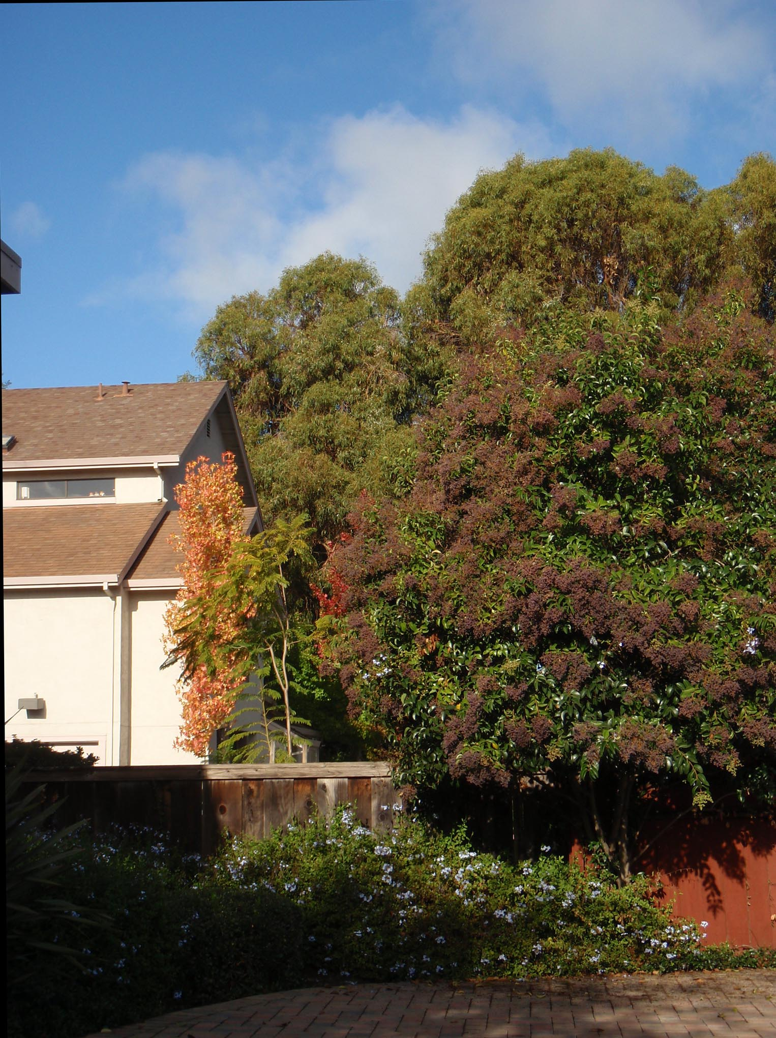 Fall - Trees and Plants