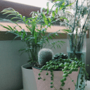 buy-plants-change-your-life