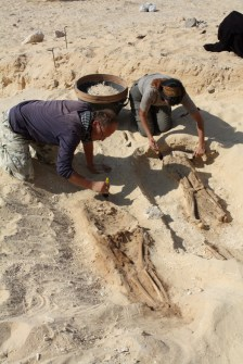 With over 600 graves excavated, the work has produced one of the largest assemblages of human remains and funerary items available for study from Pharaonic Egypt.