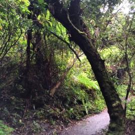 A walk through Poas National Park in Costa Rica