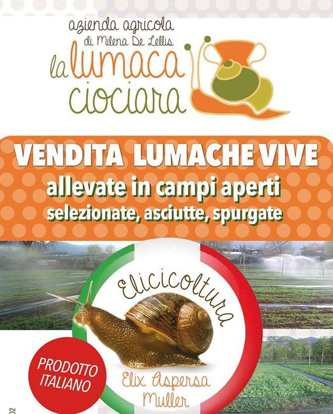 Elicicoltura, nasce ad Amaseno uno dei primi allevamenti di lumache in provincia di Frosinone