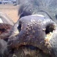 Gara di solidarietà degli allevatori della valle dell'Amaseno, donati 10.000 euro alla Ausl di Frosinone