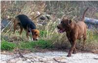 abandoneddogs