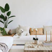 5 consigli per l'uso di piante e fiori finti negli interni