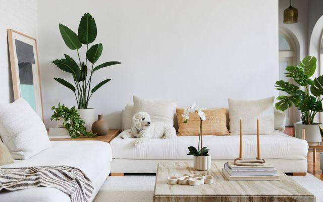 Piante finte che sembrano vere in questo elegante soggiorno