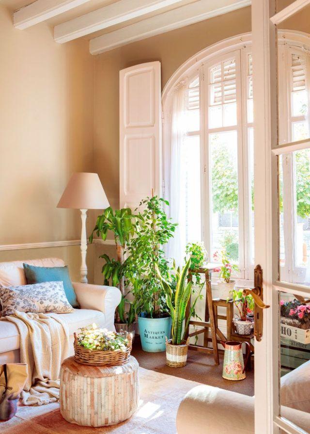 Tante piante per rallegrare il soggiorno