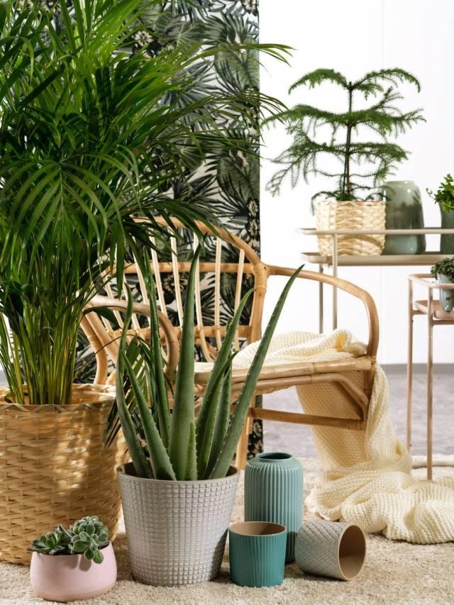 Composizione di vasi per il tuo giardino domestico