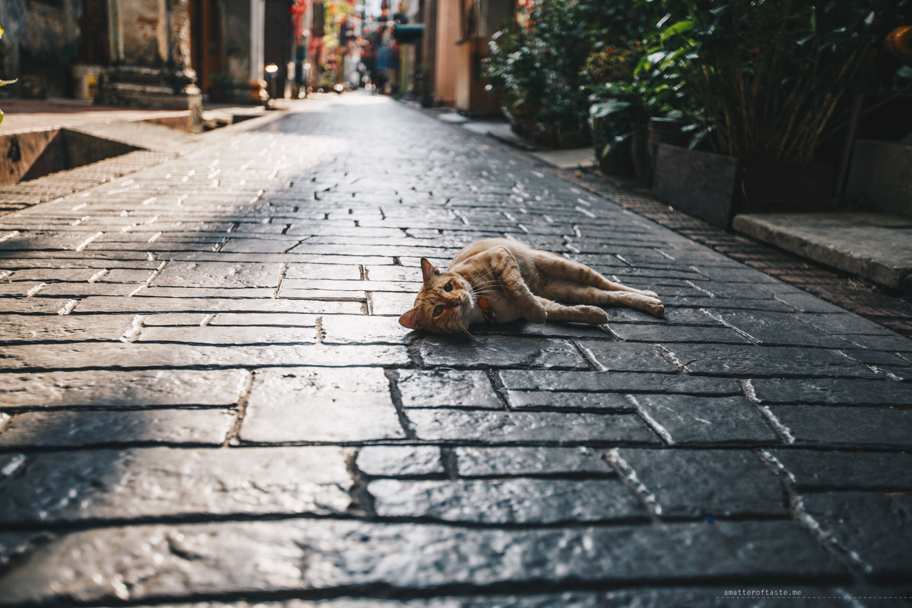 Ipoh photo ops cat