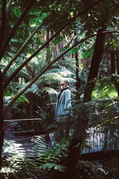 Melbourne between lockdowns royal botanic gardens