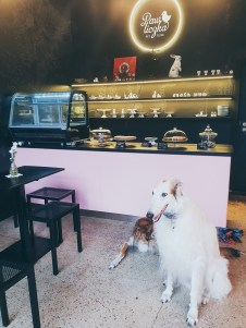 PetPunk Ostrava dogs