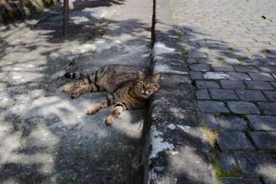 Taiwan beautiful cat