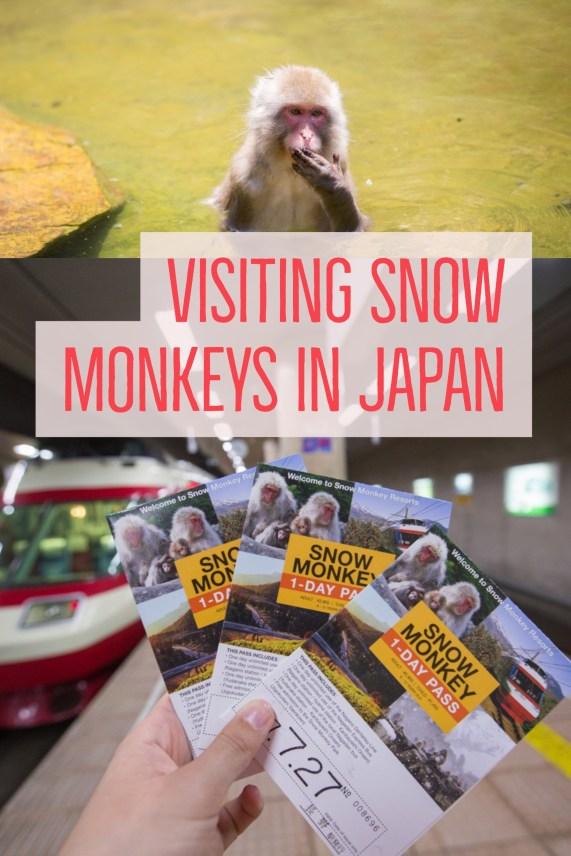 snow-monkeys-japan