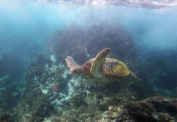Snorkeling on Maui 3