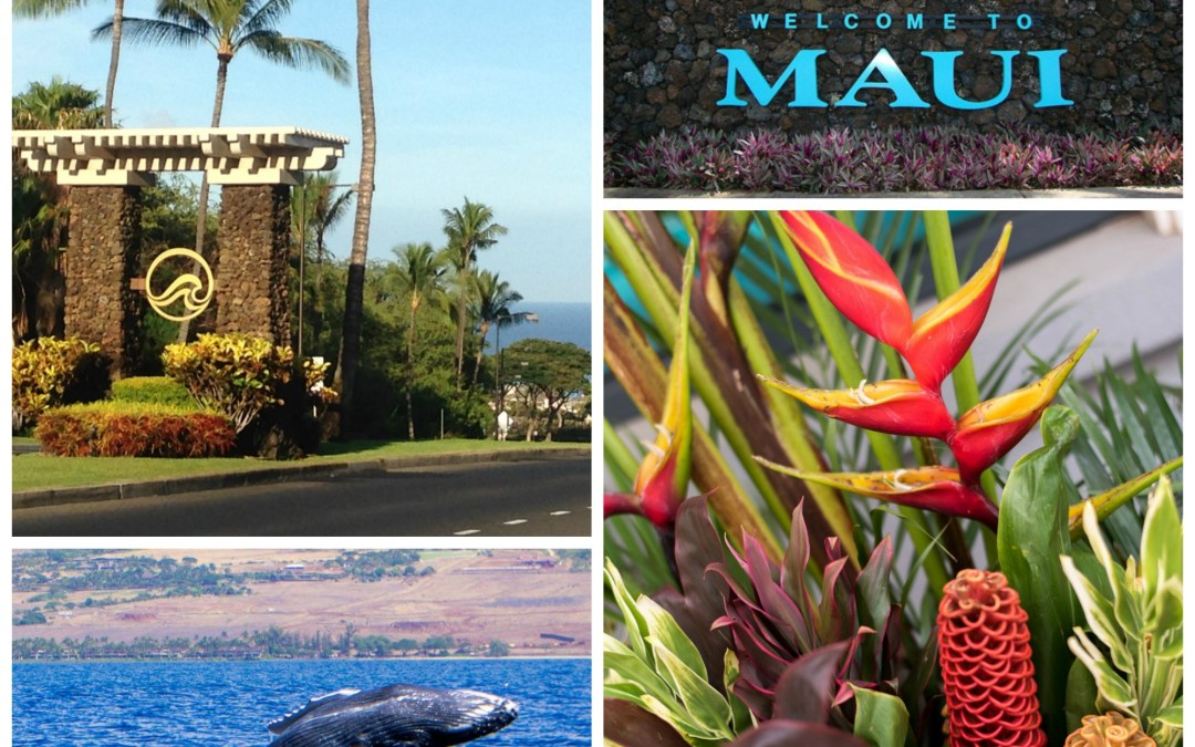 Important Reminders to Visitors on Maui, Especially Those Visiting For The First Time