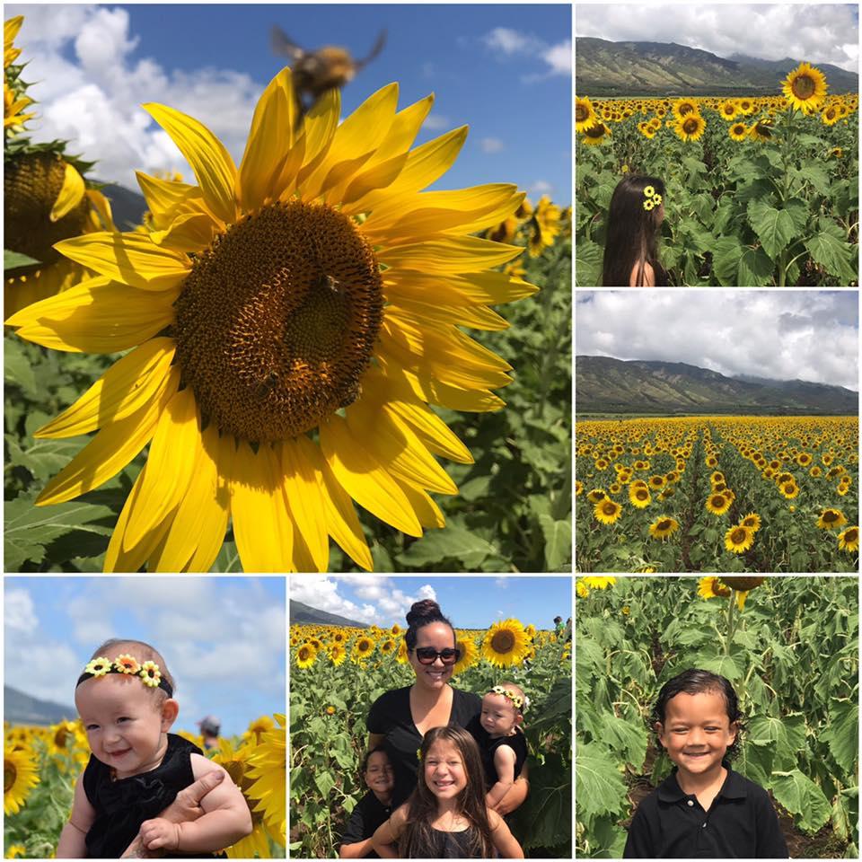 sunflowers-on-maui-collage