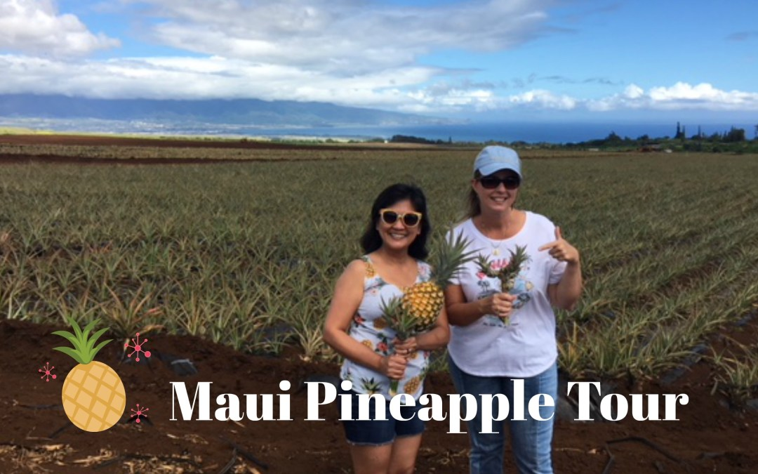 Maui Pineapple Tour – Maui Gold Pineapples – The Aloha 360