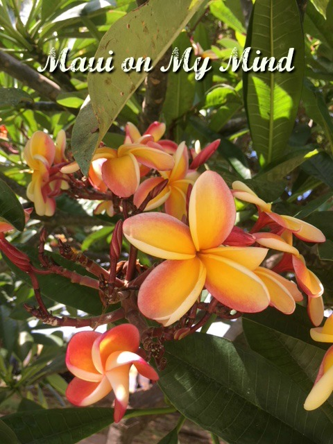 Maui Vacation Videos and Mid Year Musing