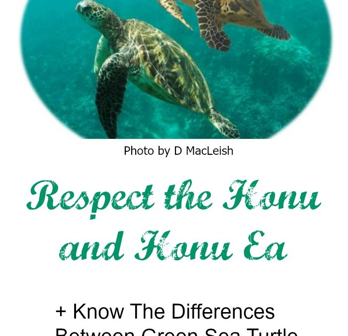 Live Aloha – Respect The Honu and Honu'ea
