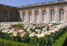 At the back of the Grand Trianon we stumbled upon this charming garden in April and took quantities of snaps in the sunlight.