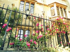 Summer in Oxford and the rambling roses maintain the aura of romance unlike the befli-flopped croquet players. https://amaviedecoeurentier.wordpress.com/2014/12/18/oxford-roses/