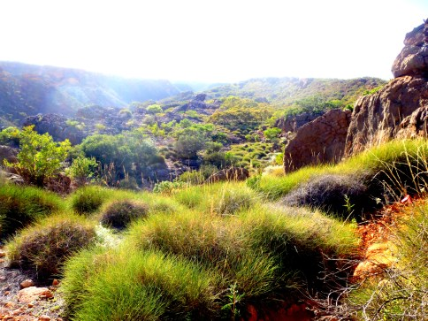 In the morning light the harsh landscape high up in the gorges of Exmouth sang with a peculiar beauty.