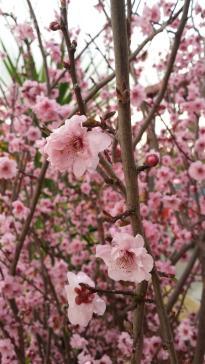The sheer profligacy of blooms is delightful.