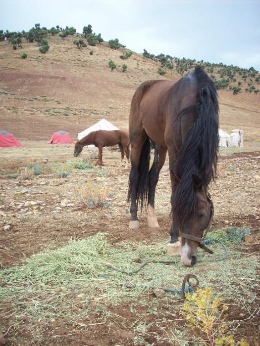 amazigh village sremt Zoom sur la vie dans le village Sremt