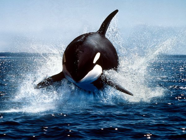 Whale Pictures