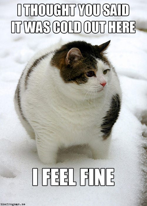 There Are Days When I Feel Like A Cat By Adehart Meme Center