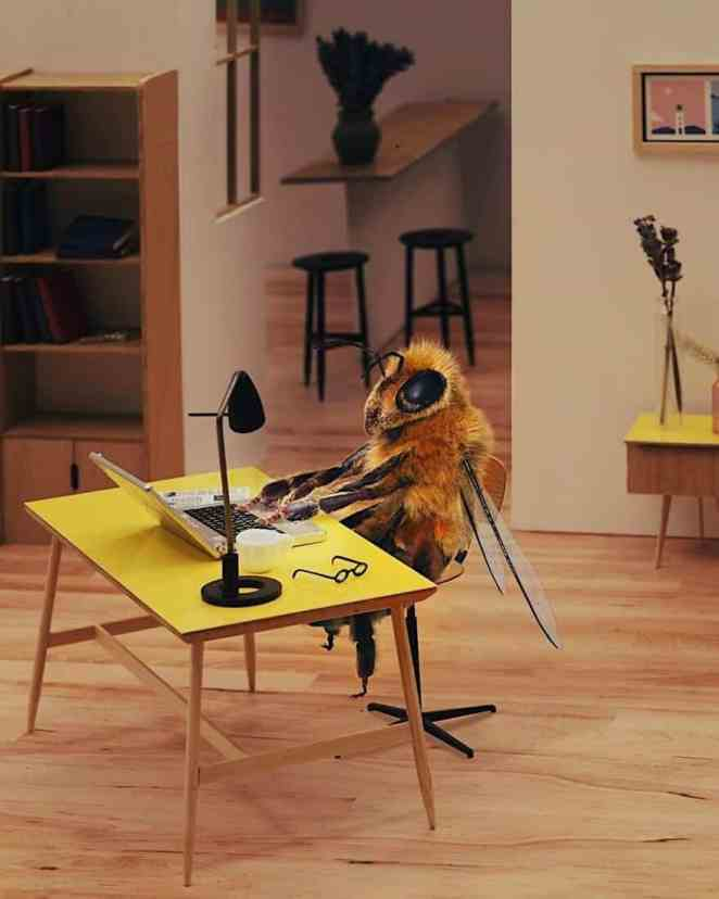 cutest campaign protect bees BeeFUND