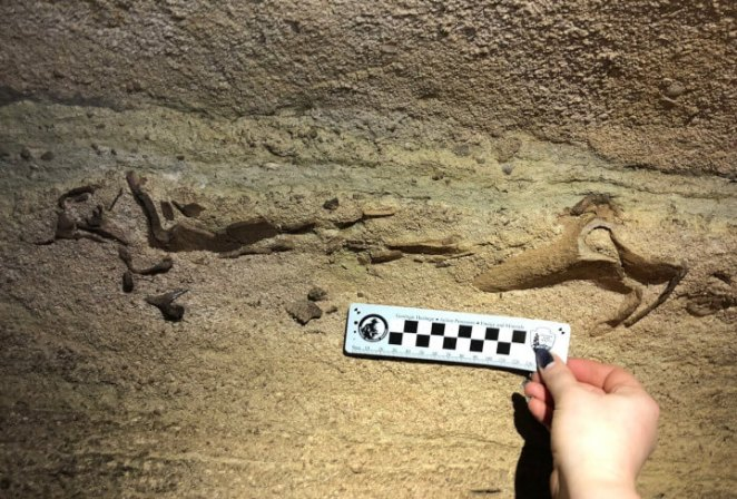 scientist Rick Olson found 300 million years old shark