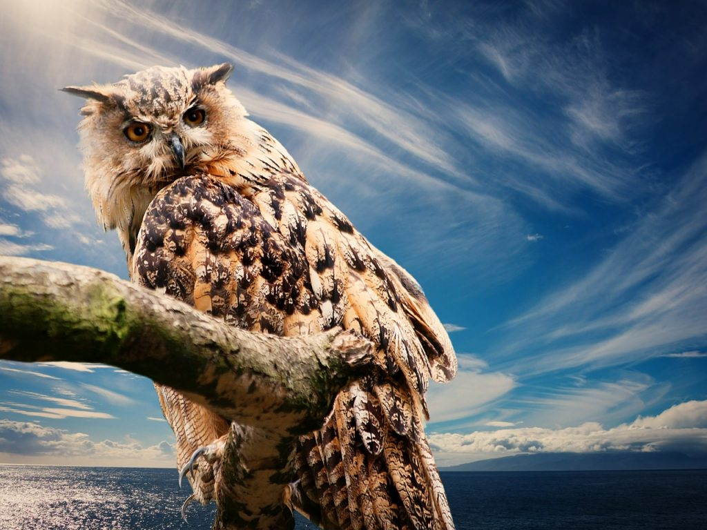 Owls Can Rotate Their Neck 270 Degrees